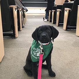 January 29: National Seeing Eye Dog Day