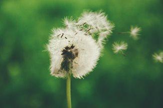 Allergic Conjunctivitis - What is It?